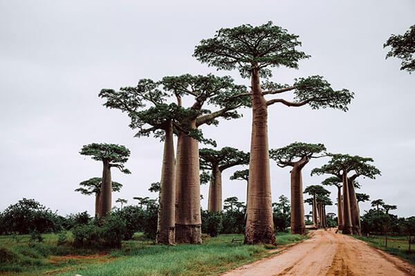 Circuit Discover Madagascar