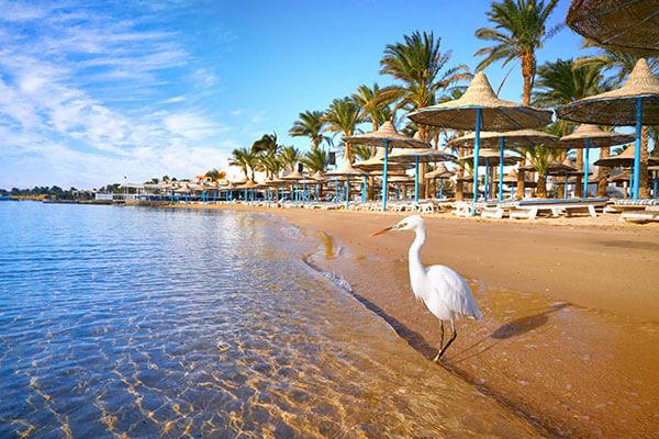 Revelion 2021 - Abu Dhabi