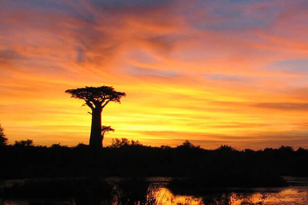 Descopera Madagascar